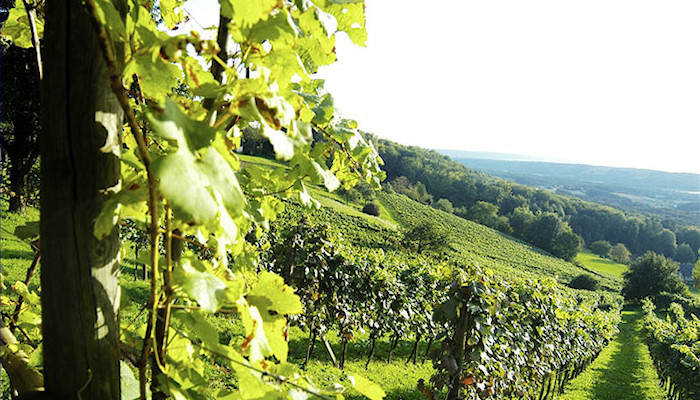Steiermark - Bad Radkersburg, wine country