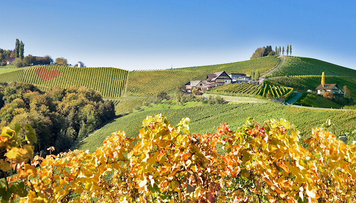Steiermark - One of many vineyards